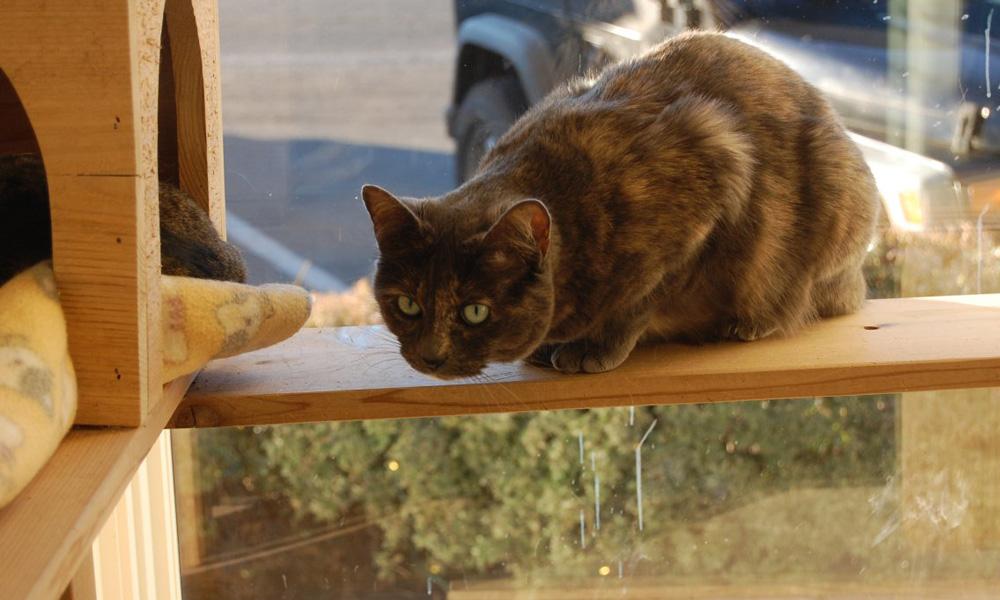 paws-cat1