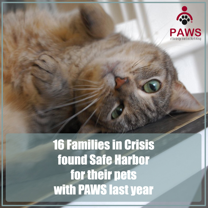 PAWS provides a safe harbor for pets and people