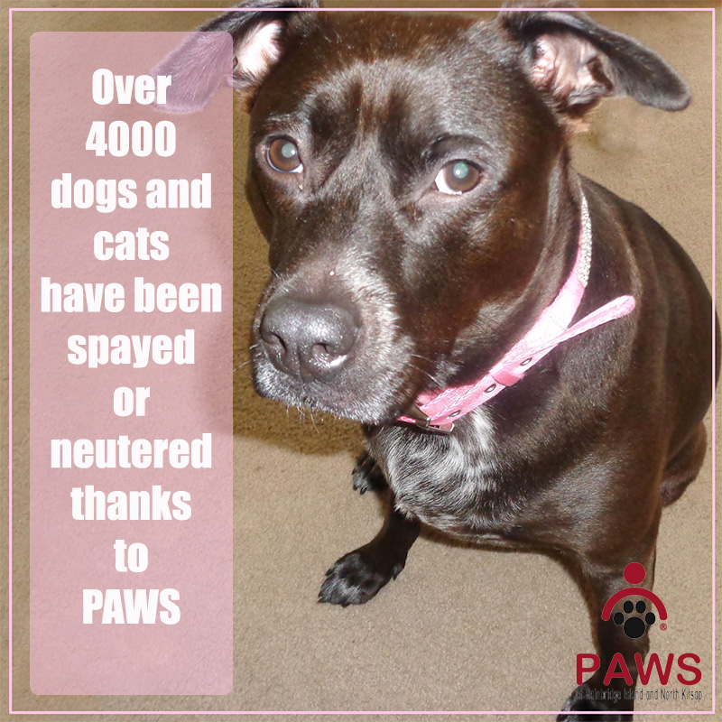 Spay and Neuter Services