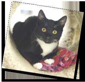 Rumford, PAWS kitten