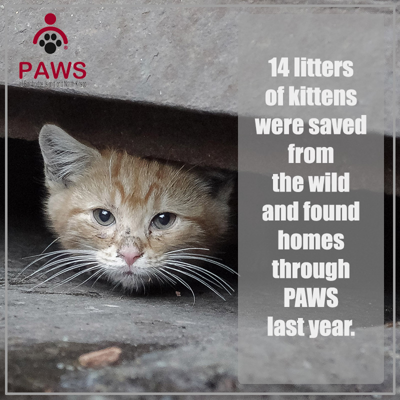 Community Cats are assisted by PAWS