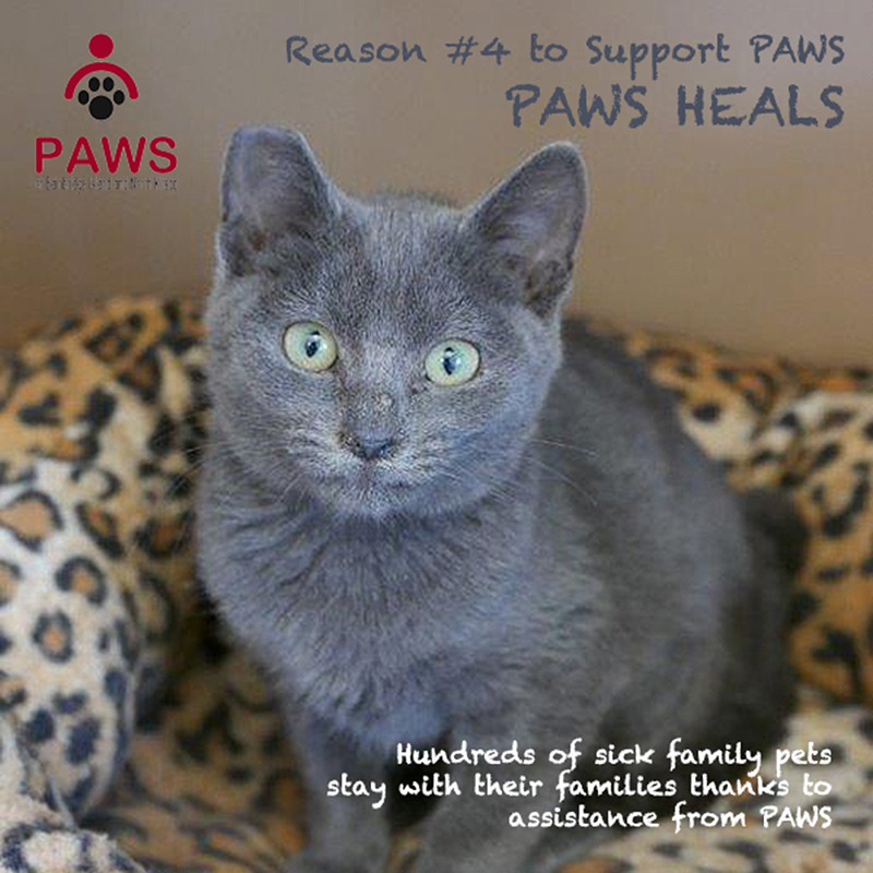 You can help, make a donation to PAWS