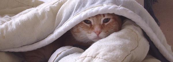 Behavior - the shy cat