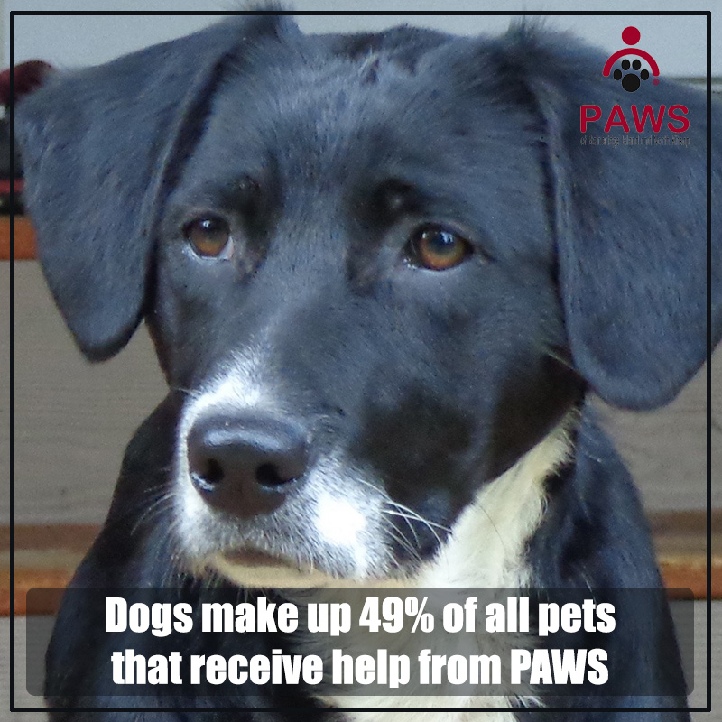 PAWS provides Veterinary Assistance